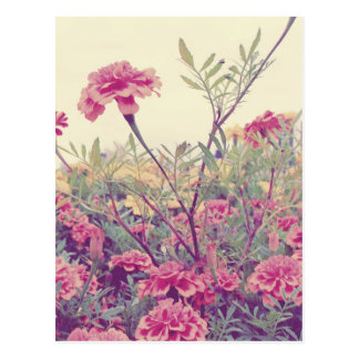 Pastel Marigolds Post Card