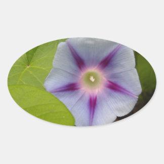 Pastel Morning Glory Oval Sticker