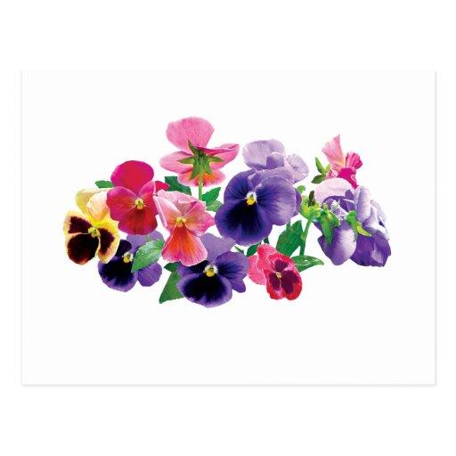Pastel Pansies Post Card