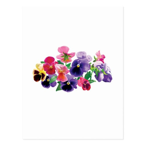 Pastel Pansies Postcards