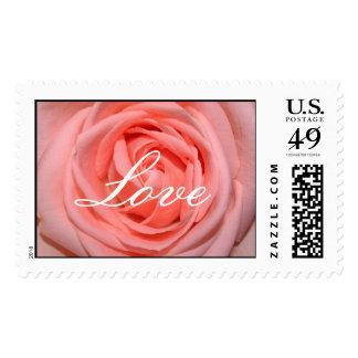 Pastel Pink  Love rose Postage Stamp