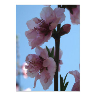 Pastel Pink of Peach Tree Blossom 5.5x7.5 Paper Invitation Card