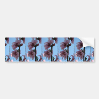 Pastel Pink of Peach Tree Blossom Bumper Stickers