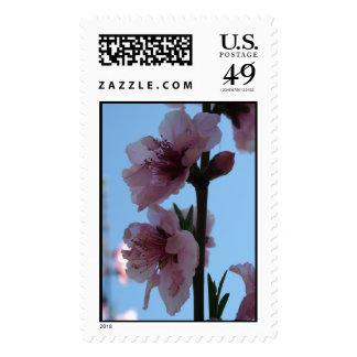 Pastel Pink of Peach Tree Blossom Stamp