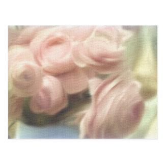 Pastel Pink Rose Cards Postcards