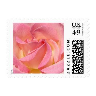 Pastel Pink Rose Flower Spiral postage stamps