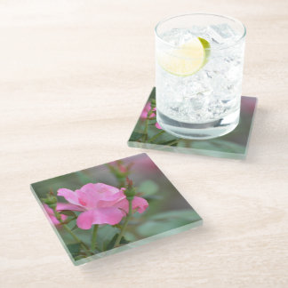 Pastel Pink Rose in Iraq Glass Coaster