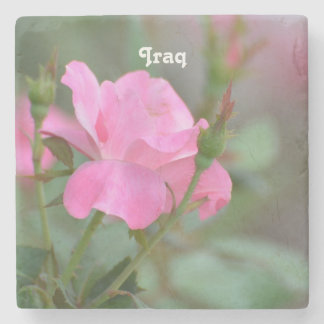 Pastel Pink Rose in Iraq Stone Coaster