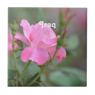 Pastel Pink Rose in Iraq Tile