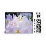 Pastel Pink White Flowers postage stamps Cards