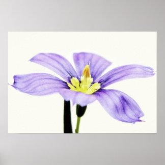 Pastel Purple Flower Poster Print