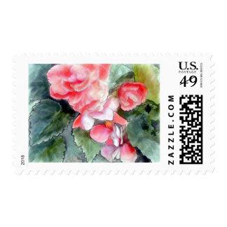 Pastel Salmon Begonias Postage