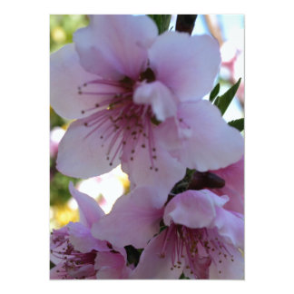 Pastel Shades of Peach Tree Blossom 5.5x7.5 Paper Invitation Card