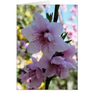 Pastel Shades of Peach Tree Blossom Greeting Card