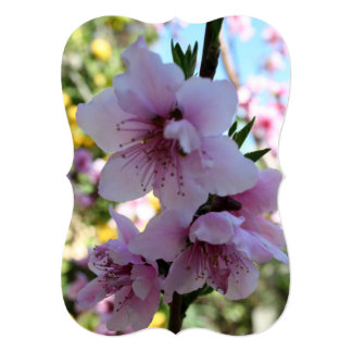 Pastel Shades of Peach Tree Blossom Announcement