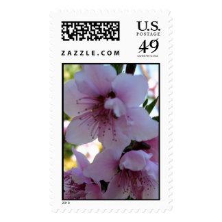 Pastel Shades of Peach Tree Blossom Postage