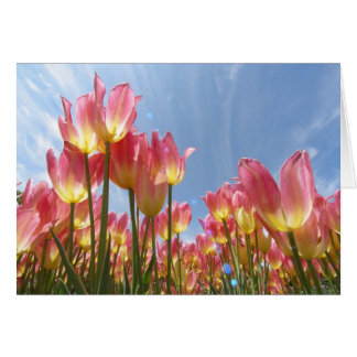 Pastel Tulips Card