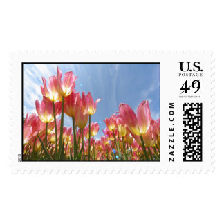 Pastel Tulips Postage Stamps