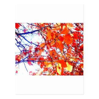 Pasteles rojos del arbolado tarjetas postales