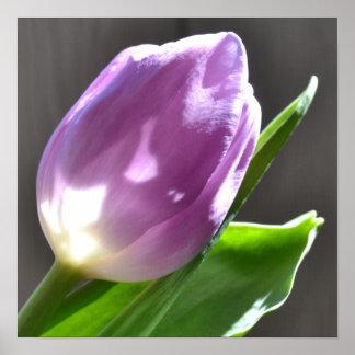 Pasteles y poster ligero del tulipán
