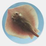 Pastinaca atlántica etiqueta redonda