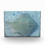 Pastinaca subacuática