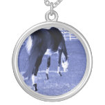 pasto azul del caballo en imagen equina collar personalizado