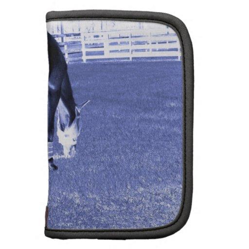 pasto azul del caballo en imagen equina planificadores