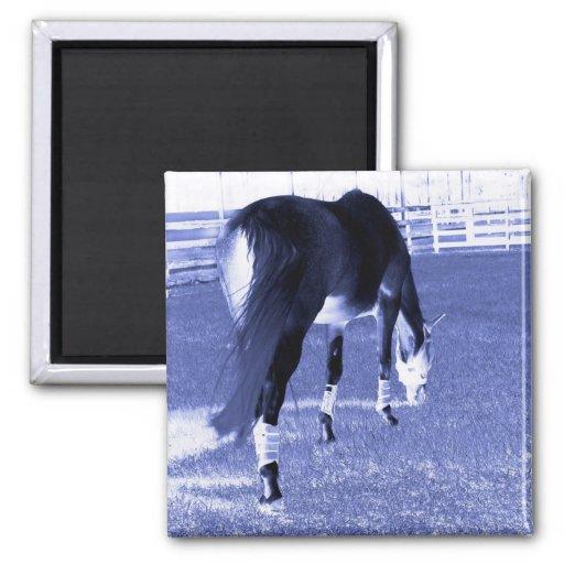 pasto azul del caballo en imagen equina imán de nevera