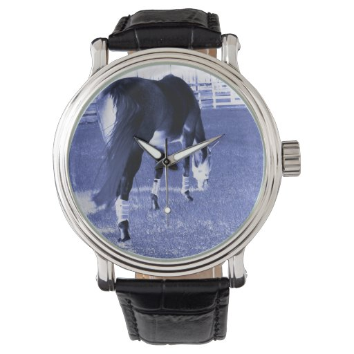 pasto azul del caballo en imagen equina relojes de pulsera