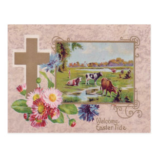 Pasto cruzado cristiano de la vaca de la margarita tarjetas postales