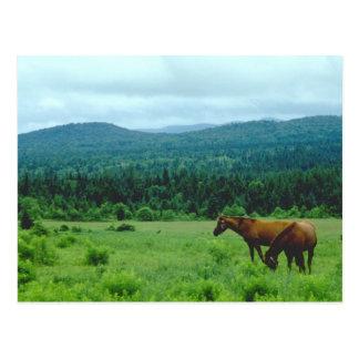 Pasto de caballos con el contexto de la montaña tarjetas postales