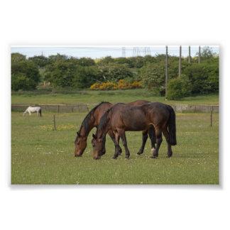 Pasto de caballos foto