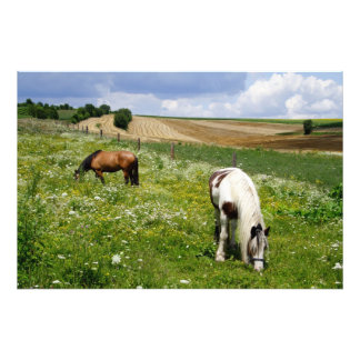 Pasto de caballos arte con fotos