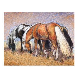 Pasto de caballos tarjeta postal