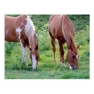 Pasto de caballos postales