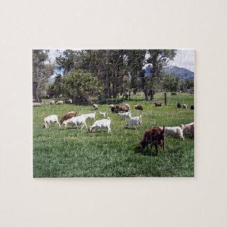 Pasto de cabras puzzles