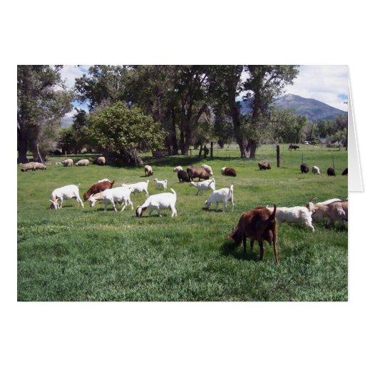 Pasto de cabras tarjeta de felicitación