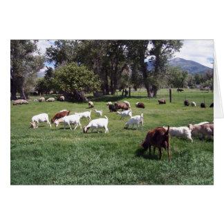 Pasto de cabras tarjetas