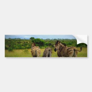 Pasto de cebras africanas pegatina para auto