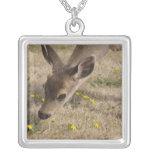 Pasto de cola negra de los ciervos (hemionus del O Grimpola