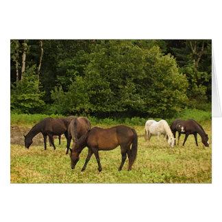 Pasto de cumpleaños de los caballos tarjeta de felicitación