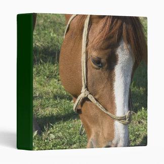 Pasto de la carpeta del caballo de proyecto