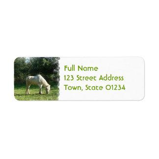 Pasto de la etiqueta de correo del caballo blanco etiquetas de remite