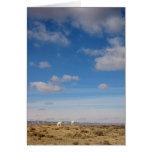 Pasto de la gama de Wind River, Wyoming Tarjeta De Felicitación