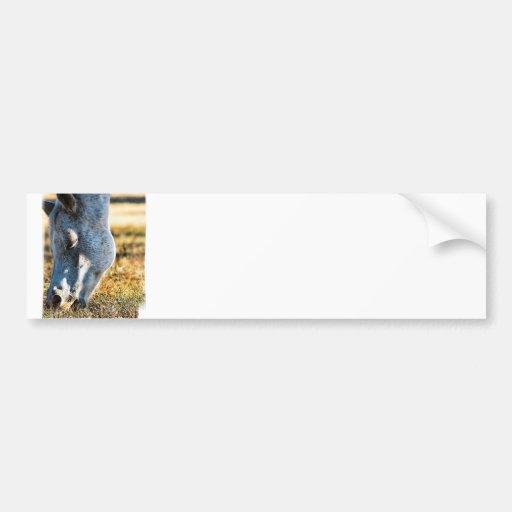 Pasto de la pegatina para el parachoques del cabal etiqueta de parachoque