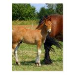 Pasto de la postal de la familia del caballo