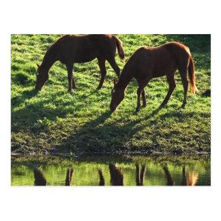 Pasto de la postal de los pares del caballo
