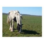 Pasto de la postal del caballo