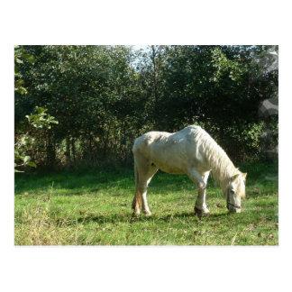 Pasto de la postal del caballo blanco